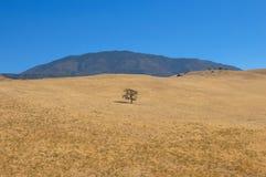Eenzame boom op de manier aan het Nationale Park van de Doodsvallei, Californië Stock Foto's