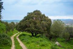 Eenzame boom op de weg stock afbeeldingen