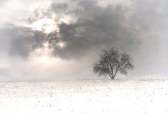 Eenzame boom op de winterweide bij maanlicht Royalty-vrije Stock Fotografie