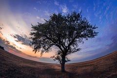 Eenzame boom op een droog die gebied bij zonsondergang met fiseyelens wordt geschoten stock foto