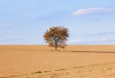 Eenzame boom op een gebied Stock Fotografie