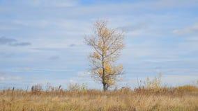 Eenzame boom op een gebied met gele de herfstbladeren stock footage