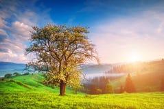 Eenzame boom op een groene heuvel Stock Afbeeldingen
