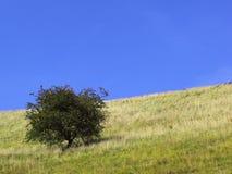 Eenzame boom op een heuvel Royalty-vrije Stock Fotografie