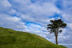 Eenzame boom op een heuvel Royalty-vrije Stock Afbeeldingen