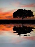 Eenzame boom op een heuvel stock afbeeldingen