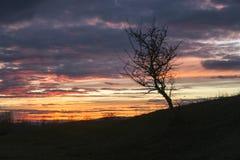 Eenzame Boom op een Heuvel bij Zonsondergang royalty-vrije stock afbeelding