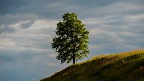 Eenzame boom op een heuvel, landelijk landschap stock foto
