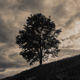 Eenzame boom op een heuvel, landelijk landschap royalty-vrije stock afbeeldingen