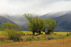 Eenzame boom op een rug van bergen Royalty-vrije Stock Foto's