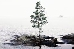 Eenzame boom op eiland Royalty-vrije Stock Afbeeldingen