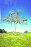 Eenzame boom op gebied Royalty-vrije Stock Fotografie