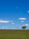 Eenzame boom op gebied Royalty-vrije Stock Foto's