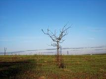 Eenzame boom op Gebied Royalty-vrije Stock Foto