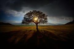 Eenzame boom op gebied bij dageraad stock afbeelding