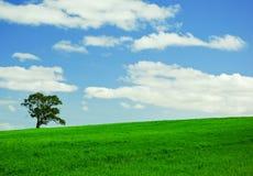 Eenzame boom op groen gebied Stock Afbeeldingen