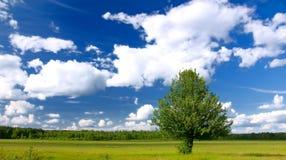 Eenzame boom op groen gebied Royalty-vrije Stock Foto