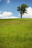 Eenzame boom op Groen gebied Royalty-vrije Stock Fotografie