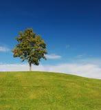 Eenzame boom op groene heuvel Stock Afbeelding