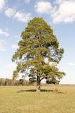 Eenzame boom op het gebied stock foto's
