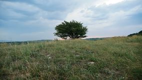 Eenzame boom op het gebied op de berg stock footage
