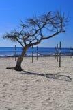Eenzame boom op het strand Stock Fotografie