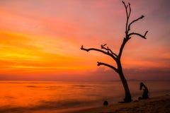 Eenzame boom op het strand Stock Foto's