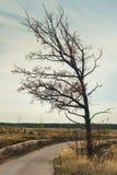 Eenzame boom op het weer van de de herfsttroebelheid stock foto's