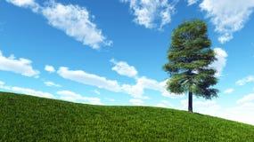 Eenzame boom op heuvel van groen gras Stock Fotografie