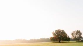 Eenzame boom op horizon royalty-vrije stock afbeeldingen