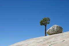 Eenzame boom op rots stock foto