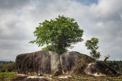 Eenzame boom op rotsen Concept vitaliteit en sterkte royalty-vrije stock foto's