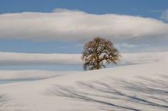 Eenzame boom op sneeuw Royalty-vrije Stock Afbeelding