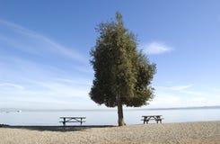 Eenzame boom op strand Royalty-vrije Stock Fotografie