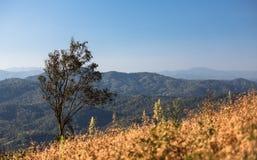 Eenzame boom op tropische berg Stock Afbeeldingen