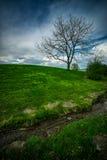 Eenzame Boom op Weelderige, Grasrijke Heuvel Royalty-vrije Stock Afbeeldingen