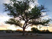 Eenzame boom over de hemel royalty-vrije stock afbeelding