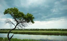 Eenzame boom over de rivier Stock Afbeeldingen