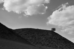 Eenzame boom over Iacobdeal-meer, Roemenië Stock Foto