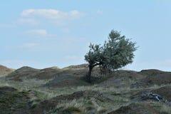 Eenzame boom over Iacobdeal-meer, Roemenië Stock Afbeelding