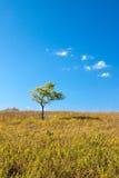 Eenzame boom in platteland stock afbeeldingen