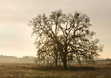 Eenzame boom in platteland Royalty-vrije Stock Afbeeldingen