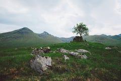 Eenzame Boom, Schotland Stock Fotografie