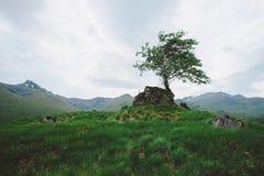 Eenzame Boom, Schotland Royalty-vrije Stock Foto