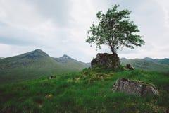 Eenzame Boom, Schotland Royalty-vrije Stock Afbeelding