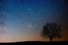 Eenzame boom in sterrige nacht Antaresgebied royalty-vrije stock afbeeldingen