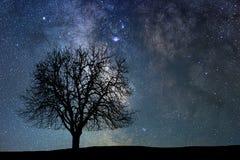 Eenzame boom in sterrige nacht Melkweg stock foto