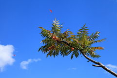 Eenzame boom tegen de hemel Stock Afbeeldingen