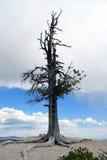Eenzame boom tegen de hemel Royalty-vrije Stock Fotografie