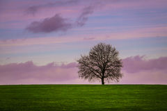 Eenzame boom tegen een kleurrijke hemel Royalty-vrije Stock Foto